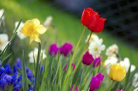 بالصور عبارات عن الربيع اجمل عبارات في الربيع , كلام جميل عن فصل الربيع 20160723 186