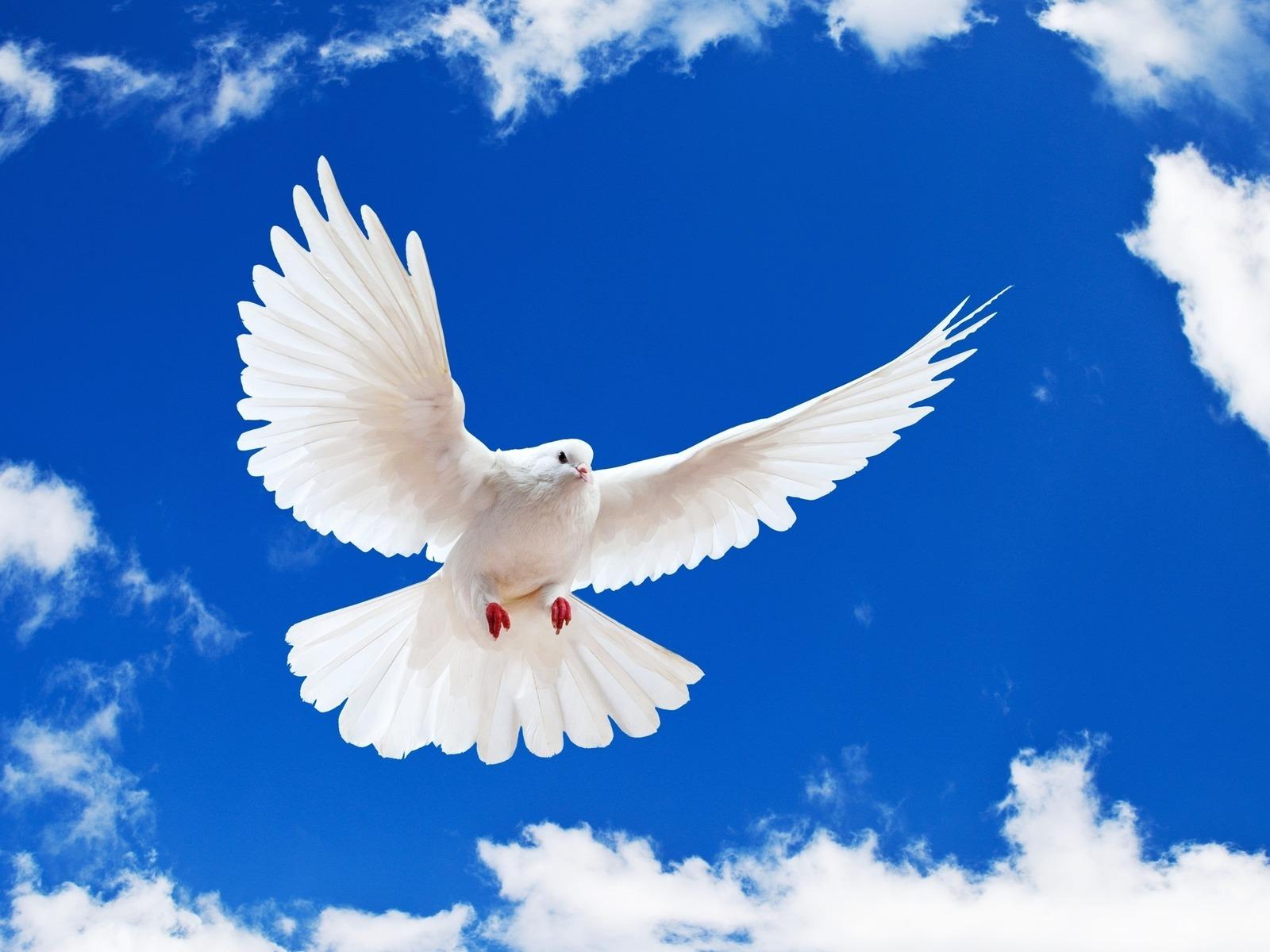 صورة كلمات عن السلام , حمامات السلام تحلق بأدبياتها البيضاء