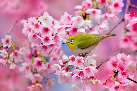 صورة كلمات عن الربيع