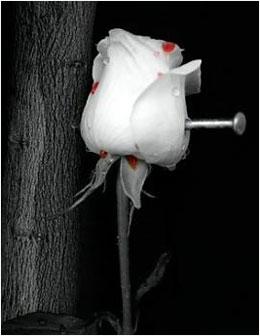 صور كلام قصير في الحب