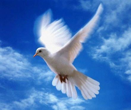صورة معنى كلمة السلام
